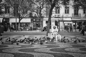 Dissuasori piccioni