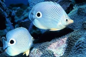 sognare-pesci