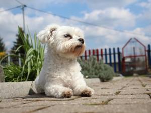 sognare-un-cane