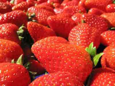 Fragole rampicanti come coltivarle e farle crescere for Pianta fragole