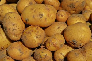 quando-si-piantano-le-patate