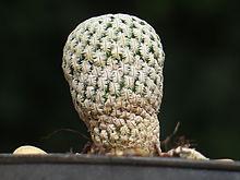 piante-grasse-rare